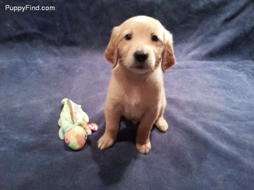 PuppyFind.com,656769