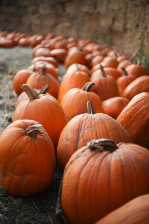 pumpkin-patch-16-18