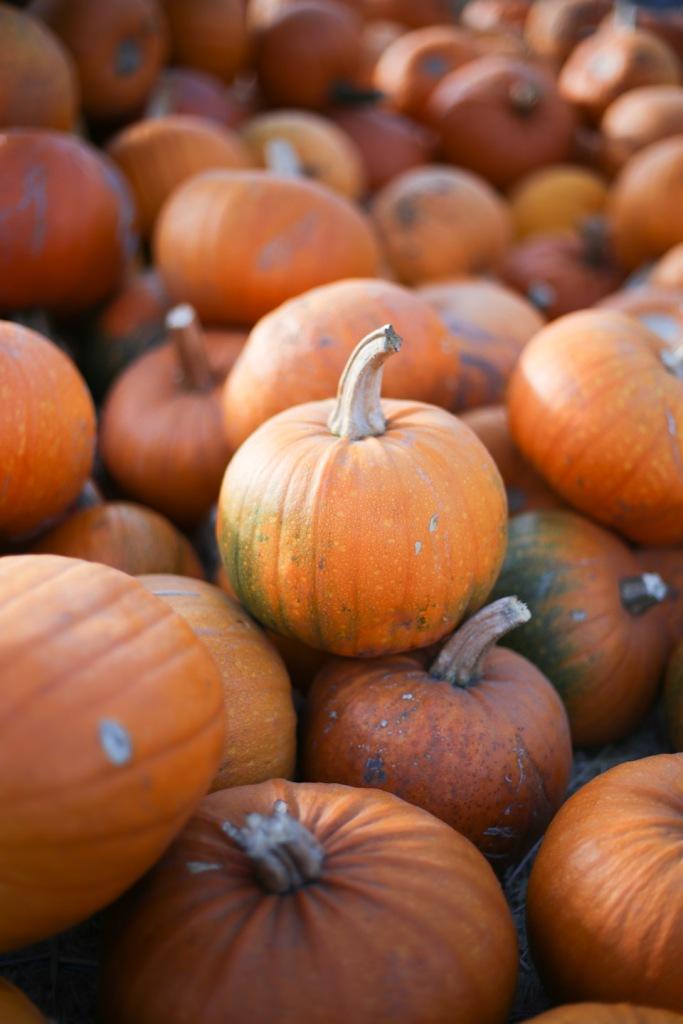 pumpkin-patch-16-2