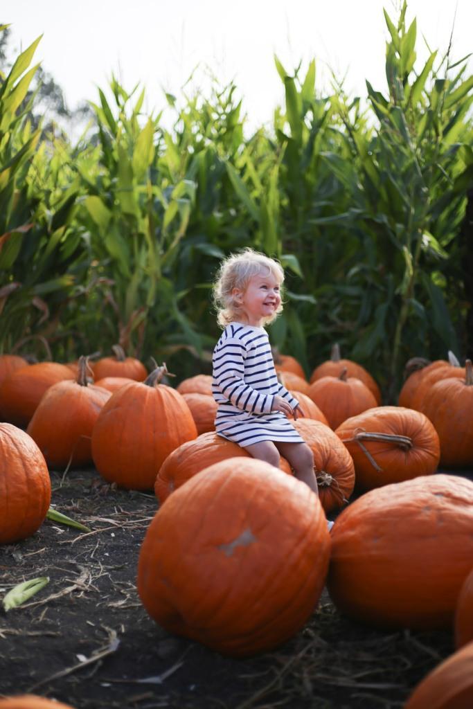 pumpkin-patch-16-7