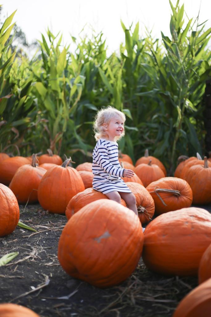 pumpkin-patch-16-8