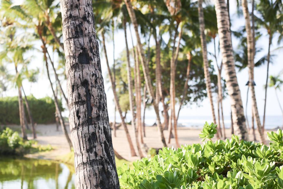 hawaii-27